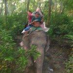elephant treck at daybreak.
