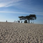 Sand dunes of Soest