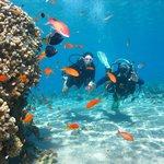 Scuba diving with Aqua sport
