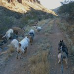 Hiking the canyon with Sam and our 4 dogs