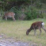 近くに鹿がいました!!