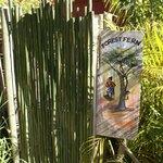 Forest Fern Eingang