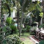 vegetazione albergo