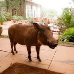 Warthog is also living there!