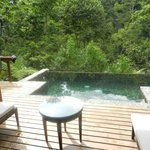 View of the pool and rainforest off the deck.