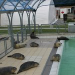 Outdoor pool with recovering seals