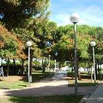 Дорога на пляж лежит через сосновый парк