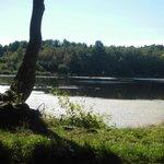 Etang Forêt De Joreau