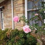 Beautiful roses attract hummingbirds.