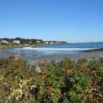 The Harbor/Beach area