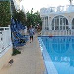 Widok na basen hotelowy
