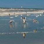 Birds on Sapelo Beach