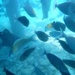 un vrai aquarium géant