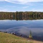 Beautiful trees reflecting in the lake