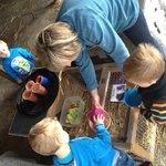Kids enjoying the animal feeding