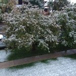 1st snowfall of the '13 winter season.
