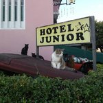 Photo de Hotel Junior