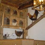 pranzare nel pollaio