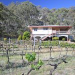 """Shiraz Cottage"" 3 bedroom self contained  Guesthouse."
