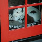 Pet friendly in a BIG way!