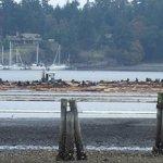 Sea Lions in Beachcomber Bay