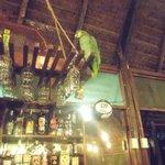 Lorito en el bar