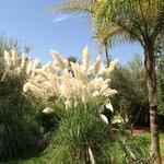 beautiflly kept gardens
