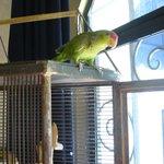 zapato the lovely housebird