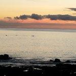 delfini all'alba