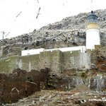 Old lighthouse on Bass Rock (1902) - Some of the northern gannets had wingspans of nearly 6 feet