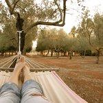 relax nell'oliveta