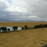 safari tsvaro east