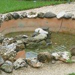 Turtle pond - condo #18