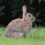 One of the locals on the croquet lawn