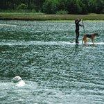 Paddle boarding w/pooch