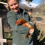 The host and owner Dalva collects fresh eggs and cares for her chickens.