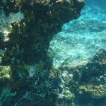 snorkeling right in front of condo