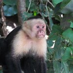Monkey at the National Park