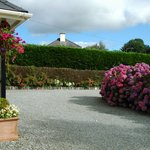 front drive of B&B - best hydrangeas on the island!