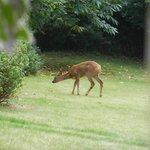 Un autre visiteur