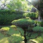 Hotel's garden