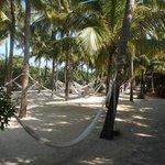hammocks to relax