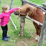 Pony in the garden