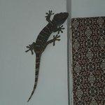 Mr Friendly Lizard