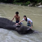 Washing elephants--a local tourist attraction