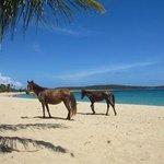 Horses in Sun Bay Beach  / Caballos en el Balneario Sun Bay