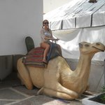 On the camel
