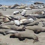 nearby activity - elephant seals