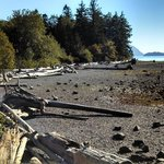 Views of Driftwood Beaches