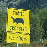 Turtle Crossing on the road up to the winery. (May actually be outside their property line.)